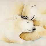 white-bears